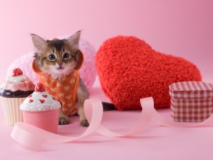 Pet_valentines_day