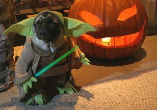 Halloween-dog-yoda